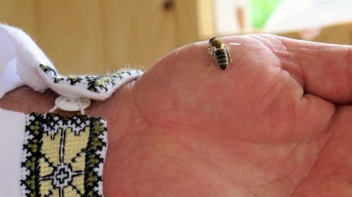 Правила поводження з бджолами
