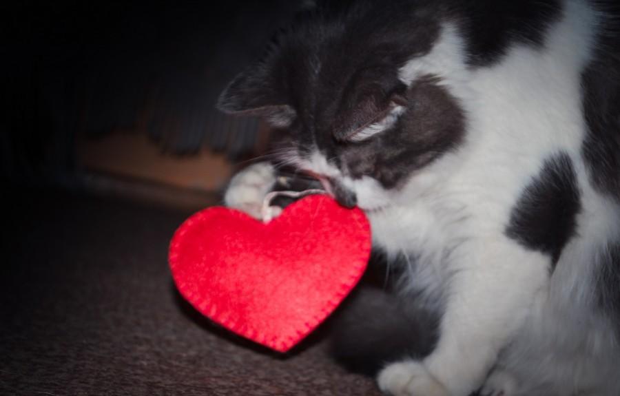 Навіть киця готується до Дня усіх закоханих