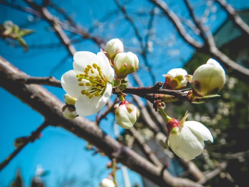 Без зайвих слів. Весняні квіти
