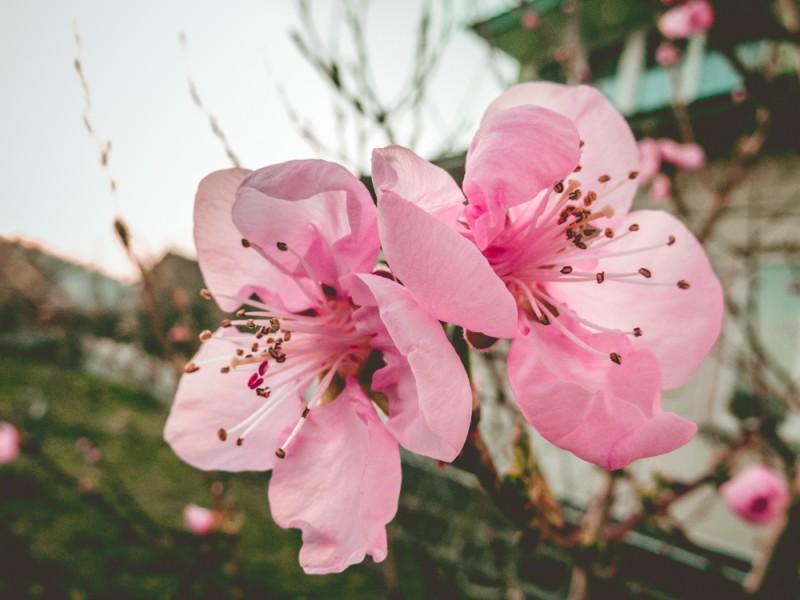 Чарівний запах з ніжним цвітом