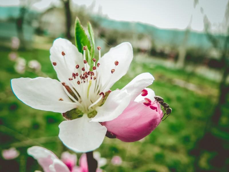 """Весна шепне тобі: """"Живи ..."""""""
