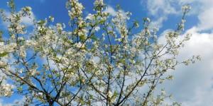 Весна повним ходом