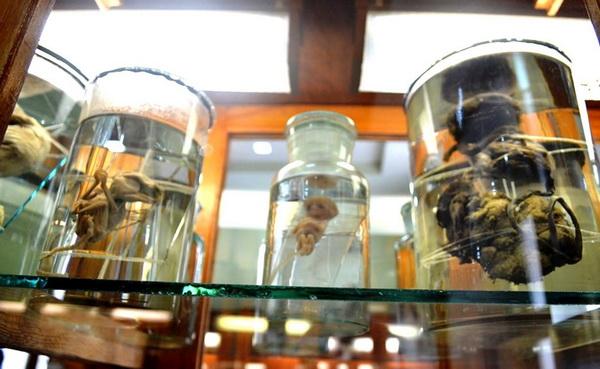 анатомічний музей