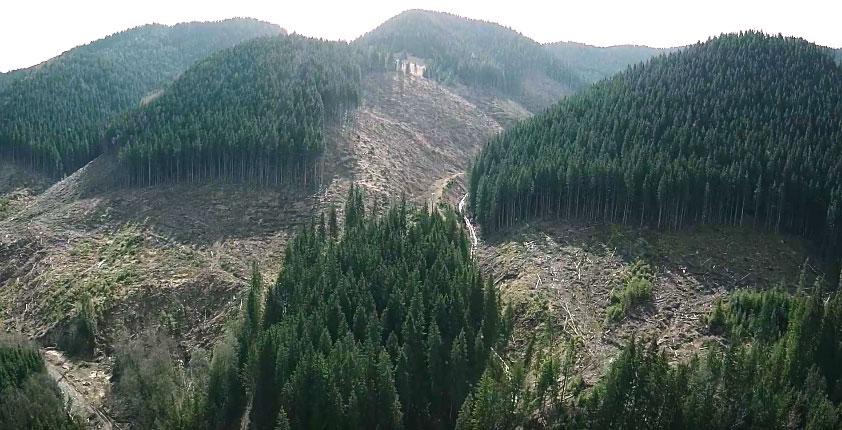 """Результат пошуку зображень за запитом """"вирубка карпатських лісів"""""""