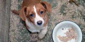 собаки бездомні