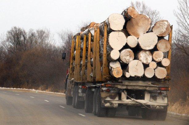 """Результат пошуку зображень за запитом """"незаконного перевезення лісодеревини"""""""