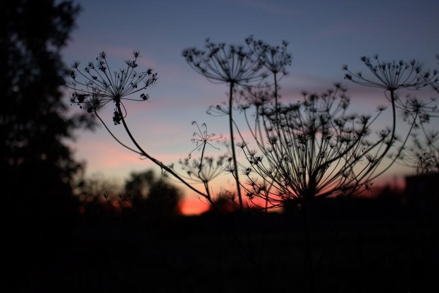 Осінні сутінки