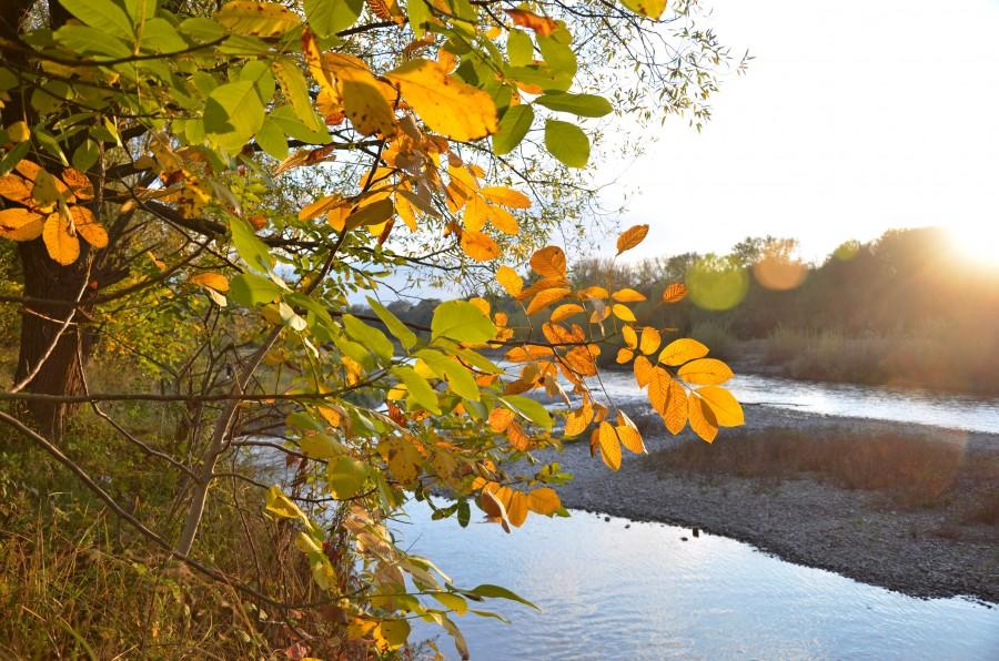 Ріка, листя