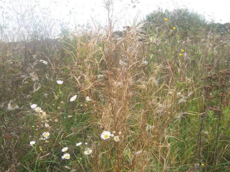 Шепіт відцвітаючих трав
