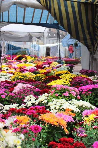 Контраст ринку і квітів