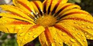 Чудове поєднання чудових квітів та крапель дощу.