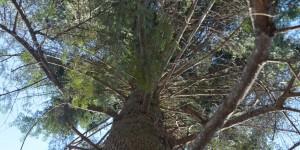 ліс дерево