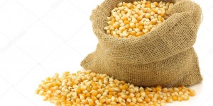 depositphotos_11354495-stock-photo-yellow-corn-grain-in-a[1]