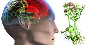 epilepsiya-narodnie-sredstva-e1458738071510