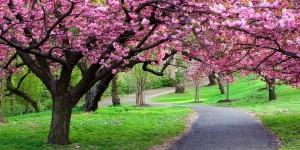 rabstol_net_spring_15