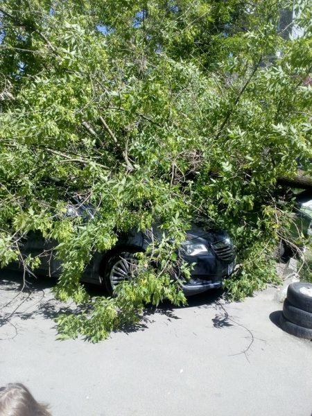 У прикарпатському містечку дерево пошкодило автомобілі