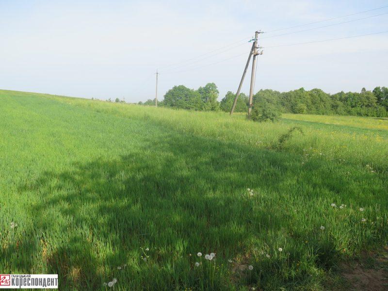 В прикарпатському селі люди намагаються землю, яку владні аферисти роздали своїм родичам (фото)