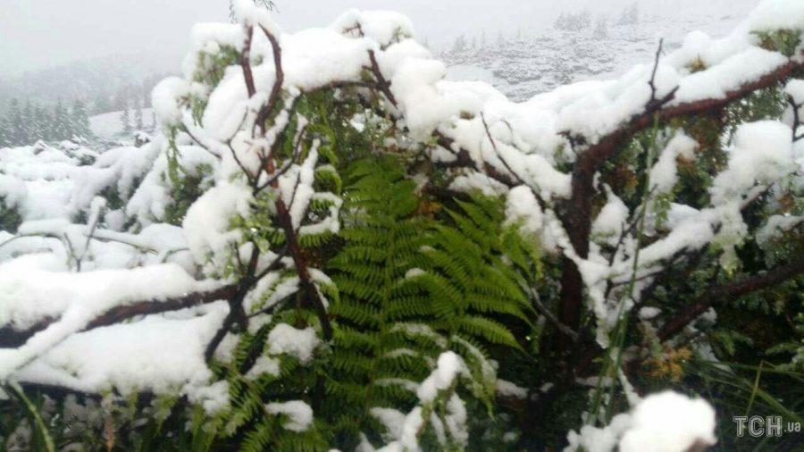 Цієї ночі високогір'я Карпат добряче засипало снігом (фоторепортаж)
