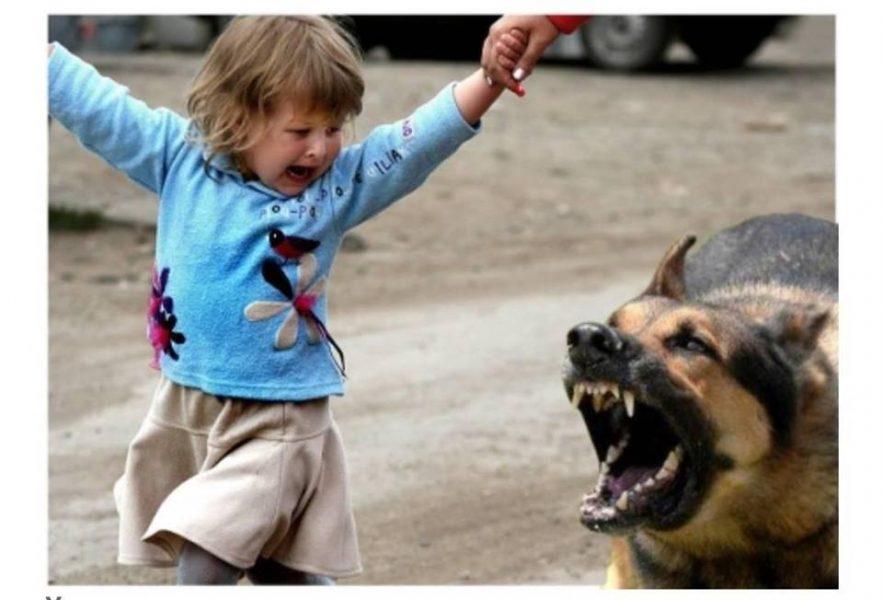 У прикарпатському містечку собака напала на маленьку дитину