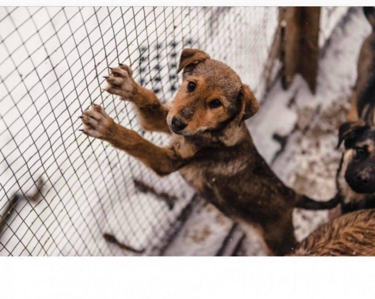 """Результат пошуку зображень за запитом """"У Калуші собачки з """"Дому Сірка"""" шукають люблячих господарів"""""""