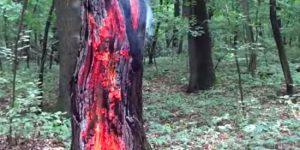 пожежа дерево